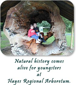 Huge tree stump brings history alive at Hayes Regional Arboretum.