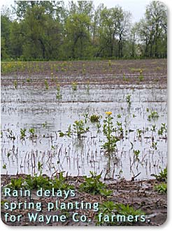 Rain delays spring planting for Wayne County Farmers.  Photo of wet fields.