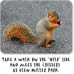 "Take a walk on the ""wild"" side and meet the critters at Glen Miller Park. (photo of squirrel)"