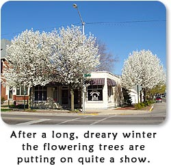 After a long, dreary winter the flowering trees are putting on quite a show.  (Corner of South Fifth and B Streets in Richmond, Indiana.)
