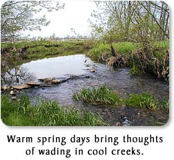 Warm spring days bring thoughts of wading in cool creeks.
