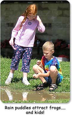 Rain puddles attract frogs...and kids.