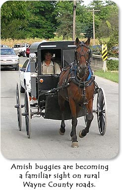 Amish buggies are becoming a familiar sight on rural Wayne County roads.