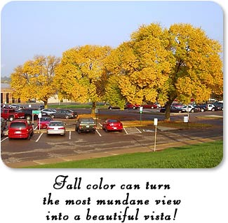 Fall color can turn the most mundane view into a beautiful vista.