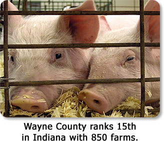 Wayne County ranks 15th in Indiana with 850 farms.
