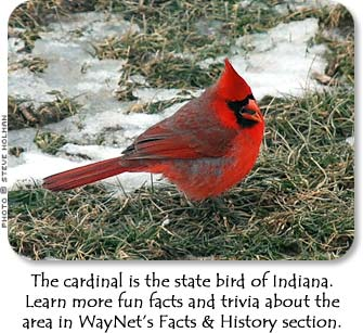 The cardinal is the state bird of Indiana.  Learn more fun facts and trivia about the area in WayNet's Facts & History section.