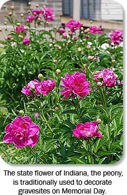 The state flower of Indiana, the peony, is traditionally used to decorate gravesites on Memorial Day.