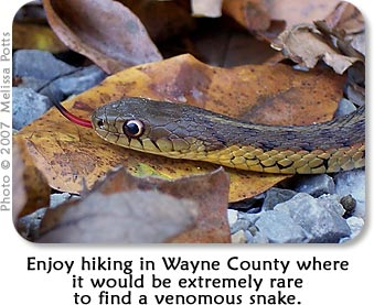 Enjoy hiking in Wayne County where it would be estremely rare to find a venemous snake.