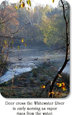 Deer cross the Whitewater River in early morning as vapor rises from the water.