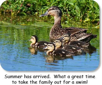 Summer has arrived.  What a great time to take the family out for a swim!