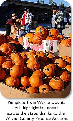 Pumpkins from Wayne County will highlight fall decor across the state, thanks to the Wayne County Produce Auction.