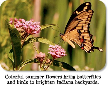 Colorful summer flowers bring butterflies and birds to brighten Indiana backyards.