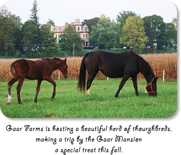 Gaar Farms is hosting a beautiful herd of thourghbreds, making a trip by the Gaar Mansion a special treat this fall.