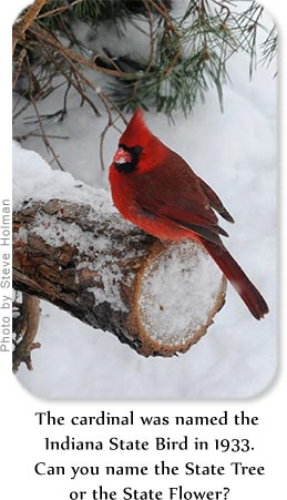 The cardinal was named the Indiana State Bird in 1933.  Can you name the State Tree or the State Flower?
