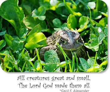 Toad: All creatures great and small, The Lord God made them all - Cecil F. Alexander