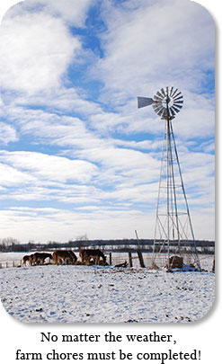 No matter the weather, farm chores must be completed!  Image: Mules eat below a windmill.