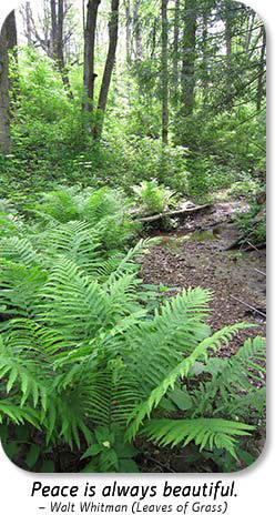 Photo: Ferns at Hayes Arboretum.  Text: Peace is always beautiful.  ~Walt Whitman (Leaves of Grass)