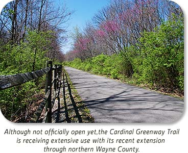 Photo: Redbuds along the trail.  Although not officially open yet, the Cardinal Greenway Trail is receiving extensive use with its recent extension though northern Wayne County.