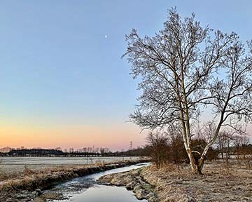 Supplied Photo: Half Moon, Frost and My Favorite Tree.