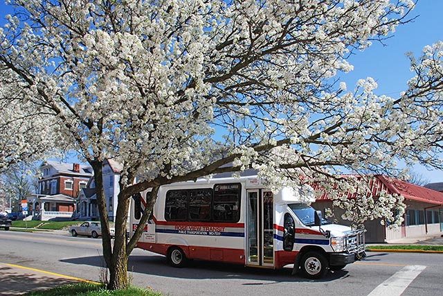 Photo: Rose View Transit Bus
